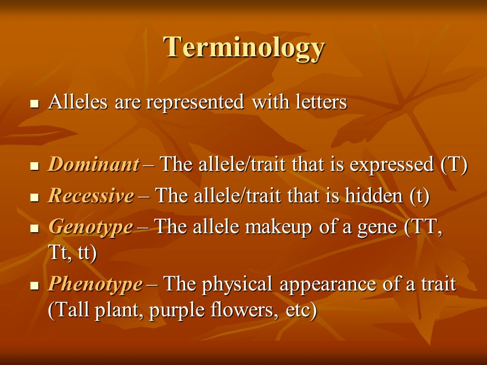 Terminology Alleles are represented with letters Alleles are represented with letters Dominant – The allele/trait that is expressed (T) Dominant – The