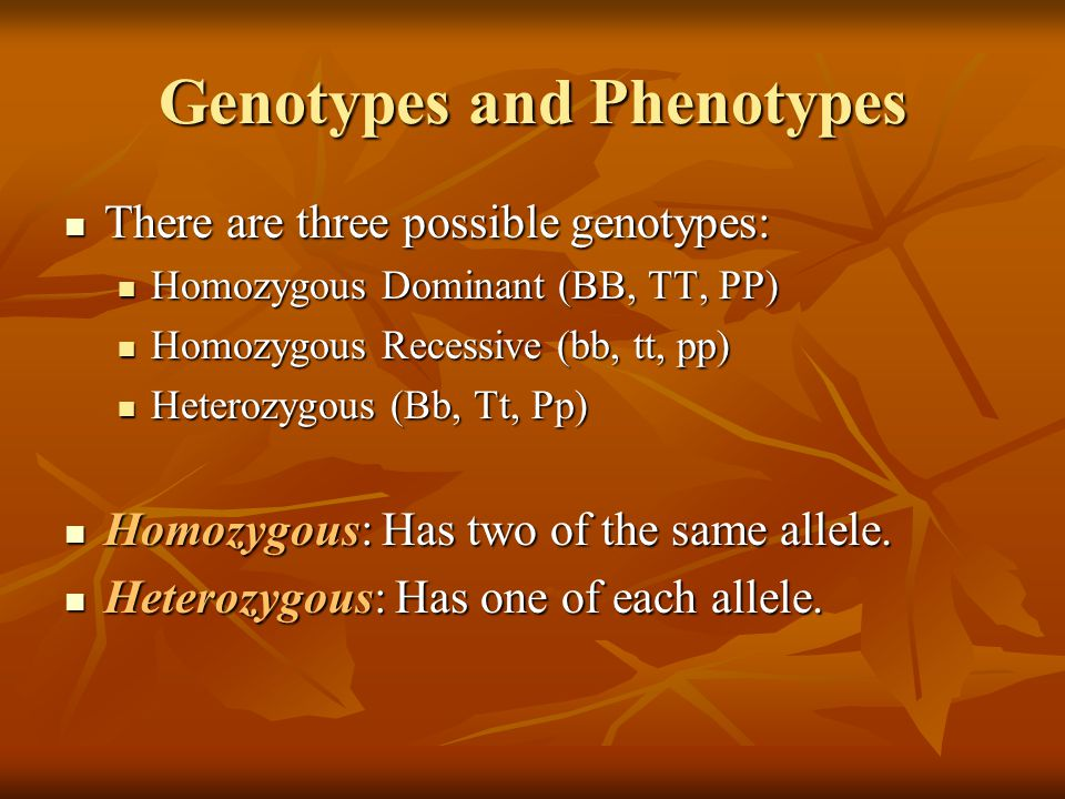 Genotypes and Phenotypes There are three possible genotypes: There are three possible genotypes: Homozygous Dominant (BB, TT, PP) Homozygous Dominant