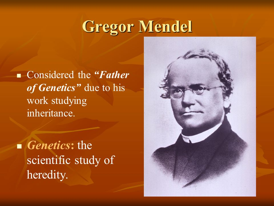 """Gregor Mendel Considered the """"Father of Genetics"""" due to his work studying inheritance. Genetics: the scientific study of heredity."""