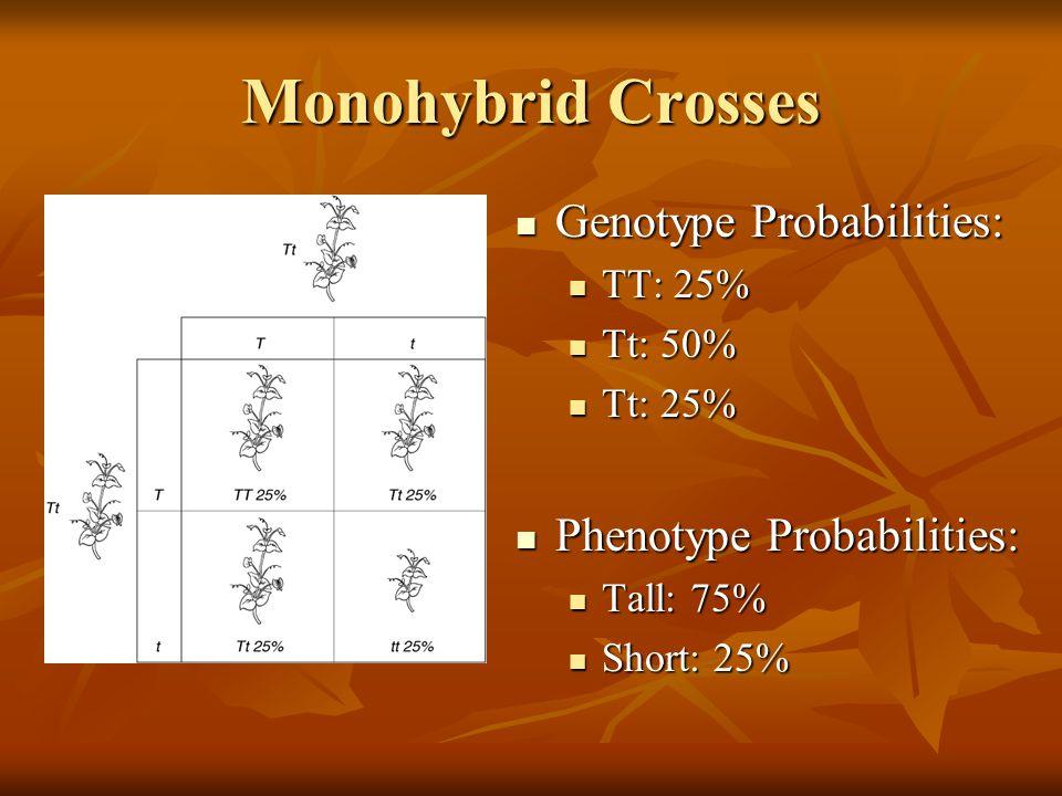 Monohybrid Crosses Genotype Probabilities: Genotype Probabilities: TT: 25% TT: 25% Tt: 50% Tt: 50% Tt: 25% Tt: 25% Phenotype Probabilities: Phenotype