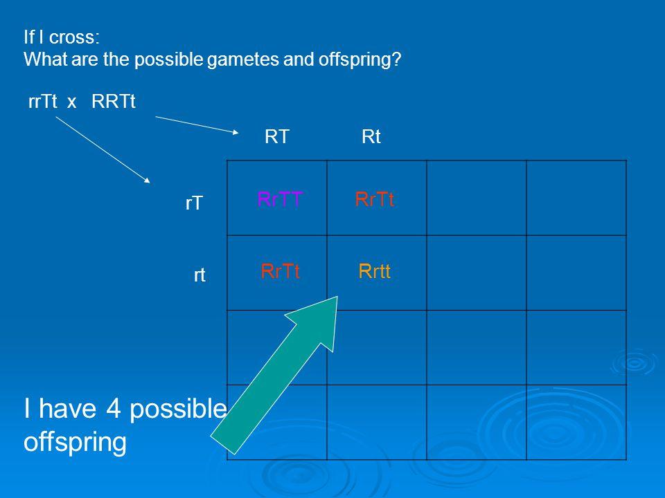 If I cross: What are the possible gametes and offspring? rrTt x RRTt rT RtRT RrTTRrTt I have 4 possible offspring rt RrTtRrtt