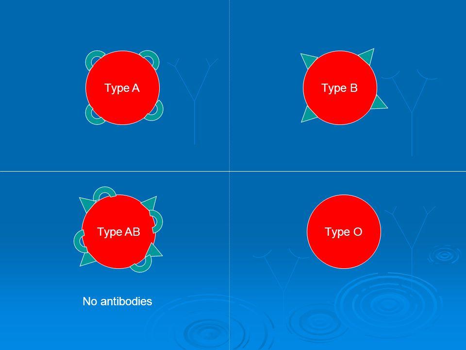 Type A Type OType AB Type B No antibodies