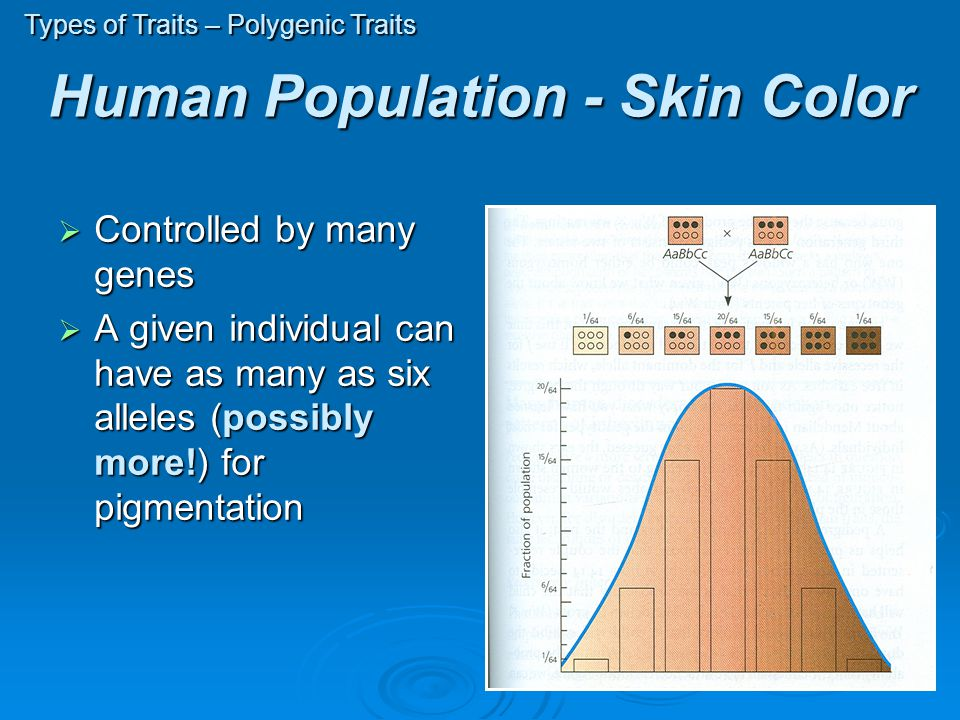 Human Population - Skin Color  Controlled by many genes  A given individual can have as many as six alleles (possibly more!) for pigmentation Types