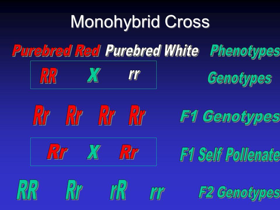Monohybrid Punnet Square Rr r r RR Male Female