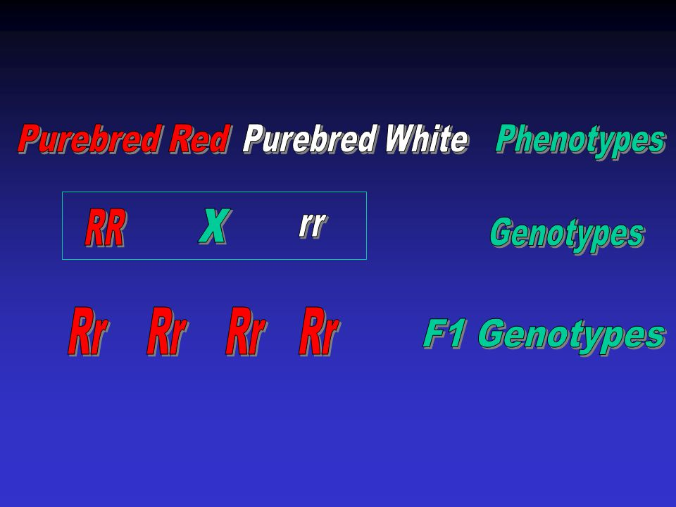Test Cross P: Red flowered X White-flowered R? rr F1: Suppose the cross produces all red flowers Rr Rr Rr Rr If no offspring showing the recessive phe