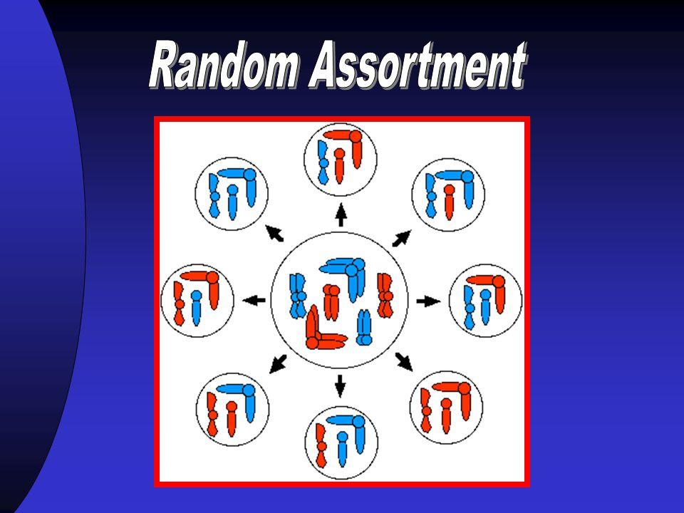 Chromosome Mapping Chromosomal Theory of Inheritance 1.Genes are located on chromosomes 2.Chromosomes undergo segregation during meiosis 3.Chromosomes