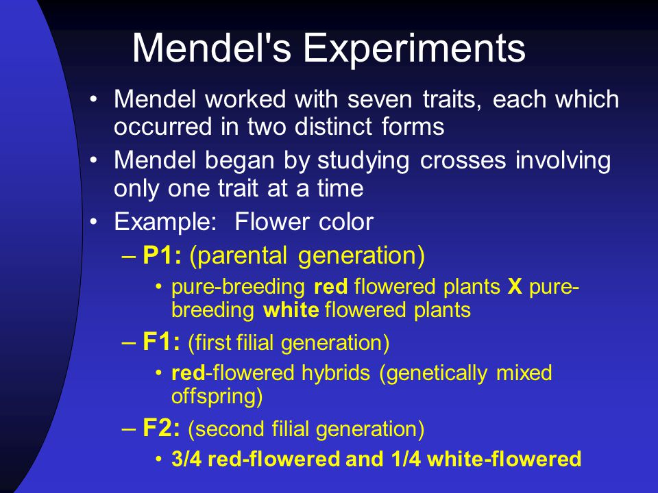 Mendel s Experiments Mendel worked with seven traits, each which occurred in two distinct forms Mendel began by studying crosses involving only one trait at a time Example: Flower color –P1: (parental generation) pure-breeding red flowered plants X pure- breeding white flowered plants –F1: (first filial generation) red-flowered hybrids (genetically mixed offspring) –F2: (second filial generation) 3/4 red-flowered and 1/4 white-flowered