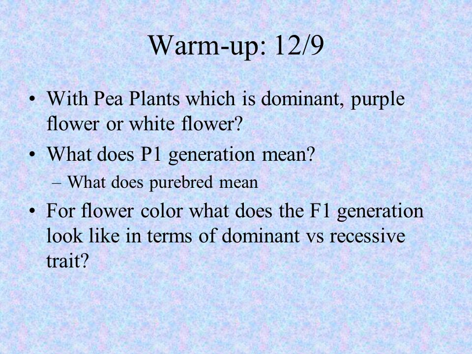 Warm-up: 12/9 With Pea Plants which is dominant, purple flower or white flower? What does P1 generation mean? –What does purebred mean For flower colo