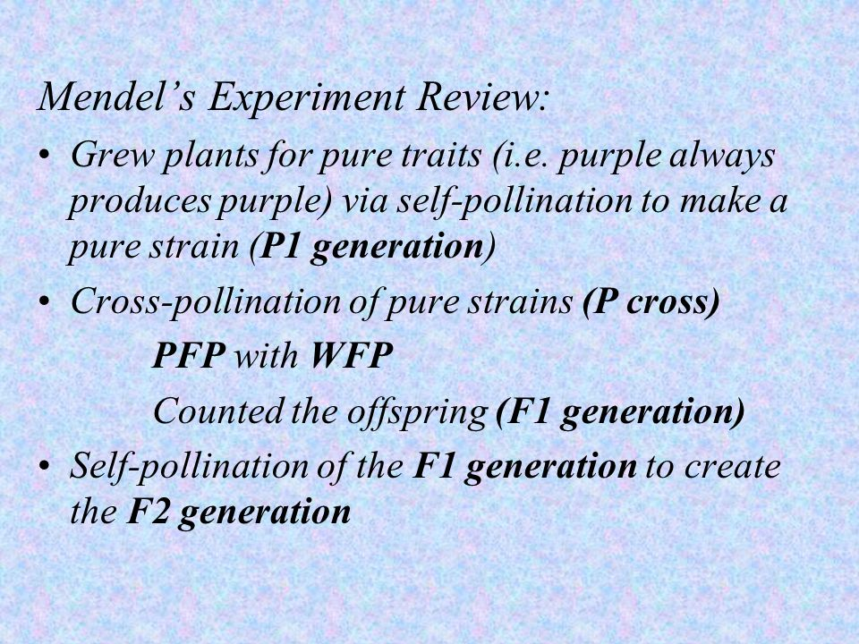 Mendel's Experiment Review: Grew plants for pure traits (i.e. purple always produces purple) via self-pollination to make a pure strain (P1 generation