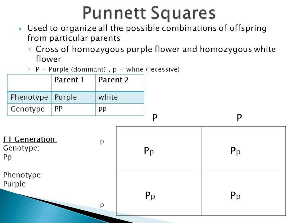  Used to organize all the possible combinations of offspring from particular parents ◦ Cross of homozygous purple flower and homozygous white flower