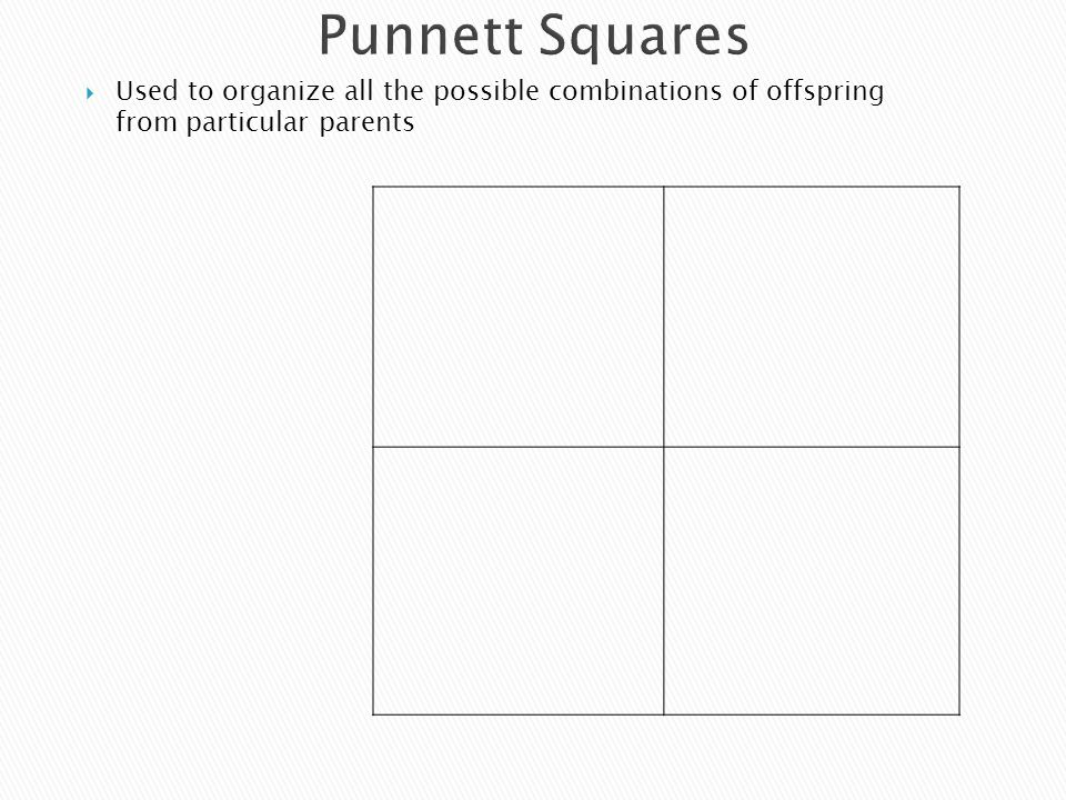 Punnett Squares  Used to organize all the possible combinations of offspring from particular parents