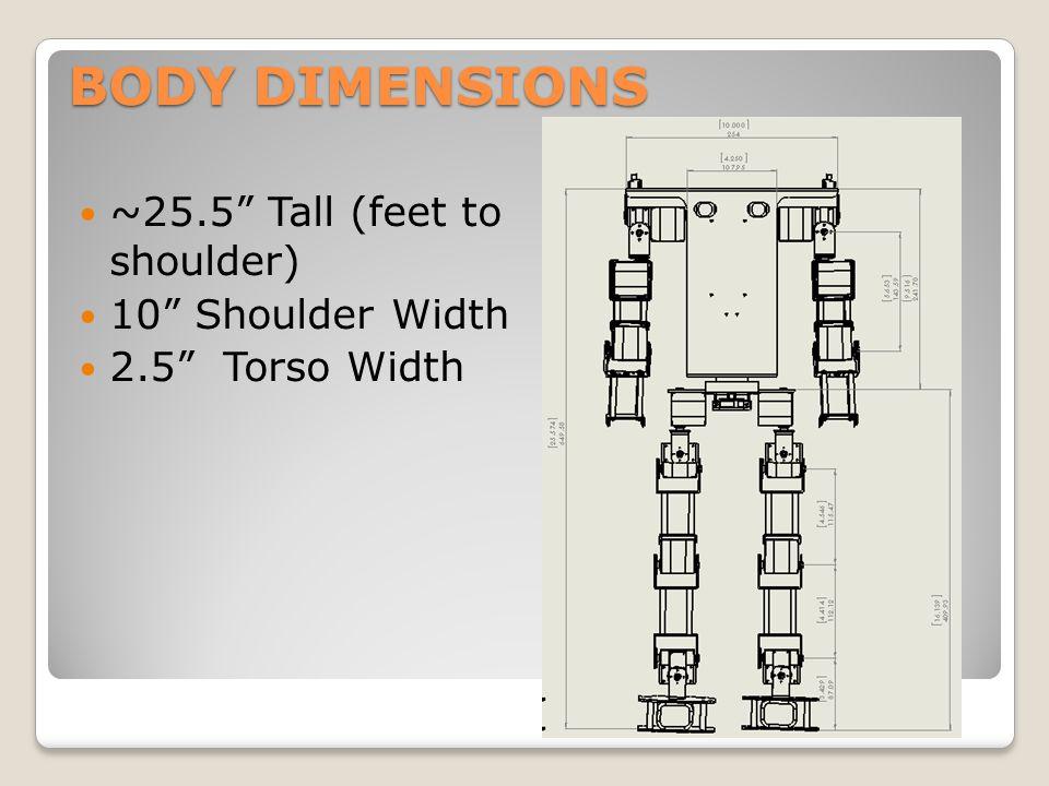 "BODY DIMENSIONS ~25.5"" Tall (feet to shoulder) 10"" Shoulder Width 2.5"" Torso Width"