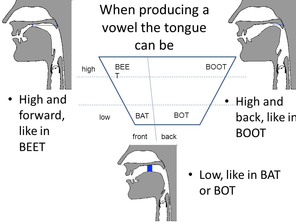 When producing a vowel the tongue can be High and forward, like in BEET High and back, like in BOOT Low, like in BAT or BOT BEE T BAT BOOT high low fr