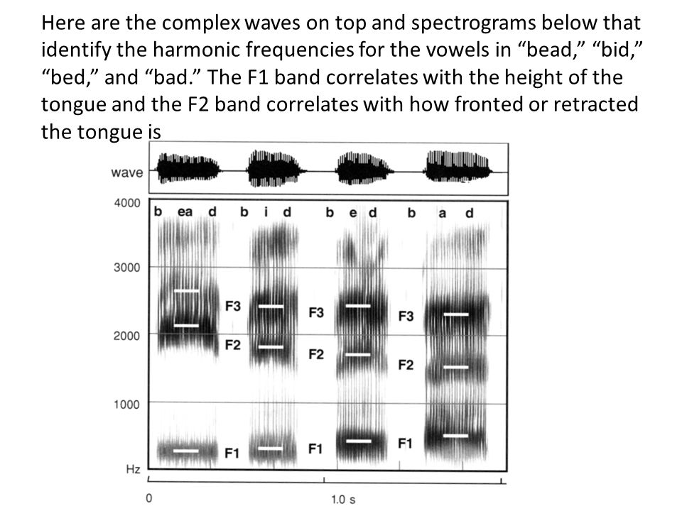 "Here are the complex waves on top and spectrograms below that identify the harmonic frequencies for the vowels in ""bead,"" ""bid,"" ""bed,"" and ""bad."" The"