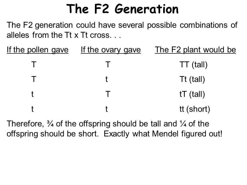 The F2 Generation The F2 generation could have several possible combinations of alleles from the Tt x Tt cross... If the pollen gaveIf the ovary gaveT