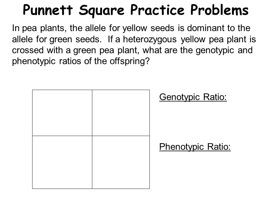 Punnett Square Practice Problems In pea plants, the allele for yellow seeds is dominant to the allele for green seeds. If a heterozygous yellow pea pl
