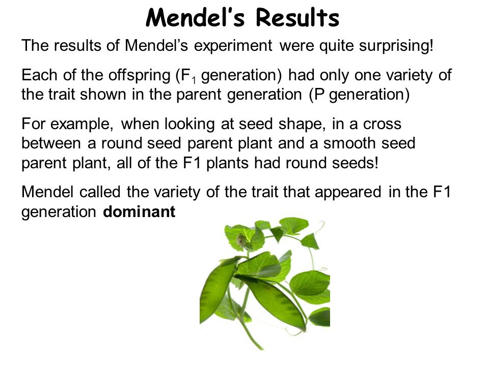 Mendel's Results The results of Mendel's experiment were quite surprising! Each of the offspring (F 1 generation) had only one variety of the trait sh