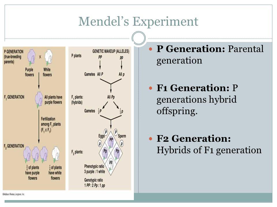 Mendel's Experiment P Generation: Parental generation F1 Generation: P generations hybrid offspring.