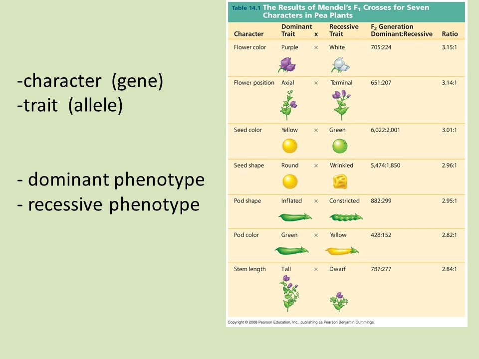-character (gene) -trait (allele) - dominant phenotype - recessive phenotype