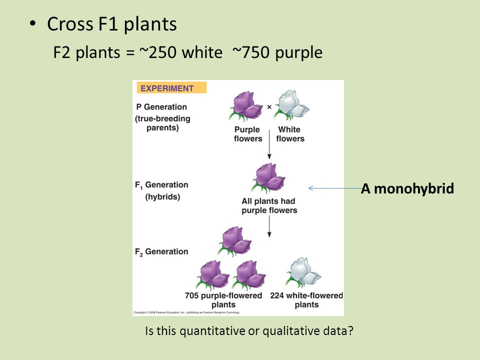 Cross F1 plants F2 plants = ~250 white ~750 purple A monohybrid Is this quantitative or qualitative data
