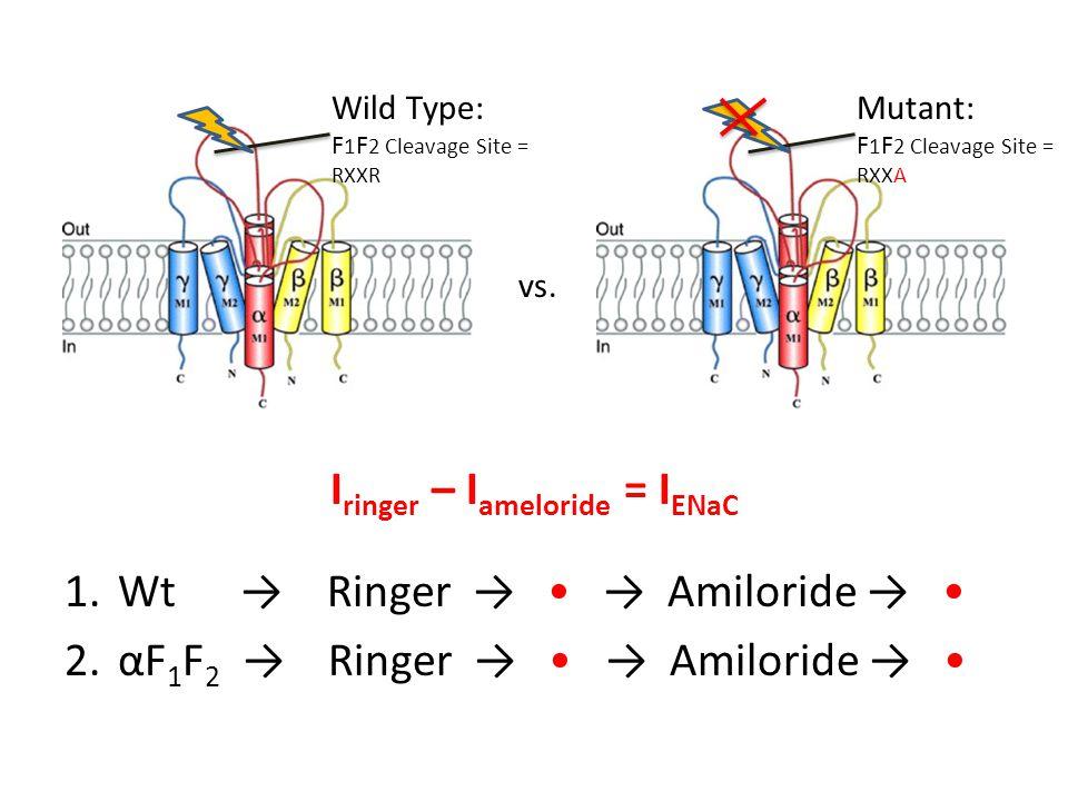Wild Type: F 1 F 2 Cleavage Site = RXXR vs.