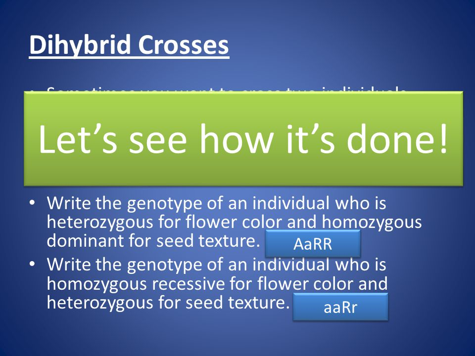 Dihybrid Crosses Sometimes you want to cross two individuals while looking at TWO different traits (flower color AND seed texture). Flower color: A =