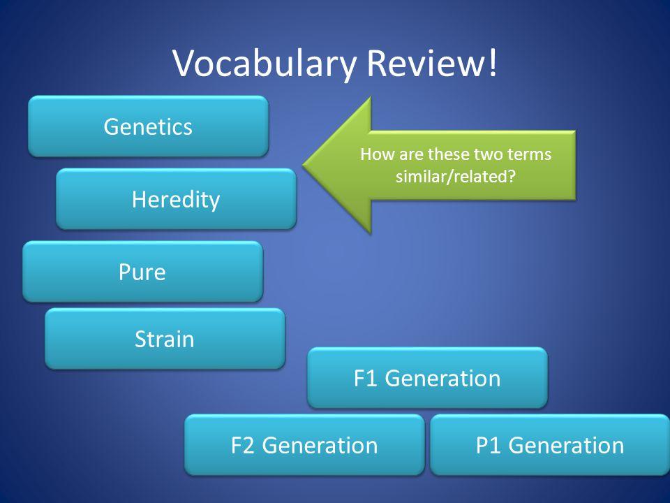 Vocabulary Review.