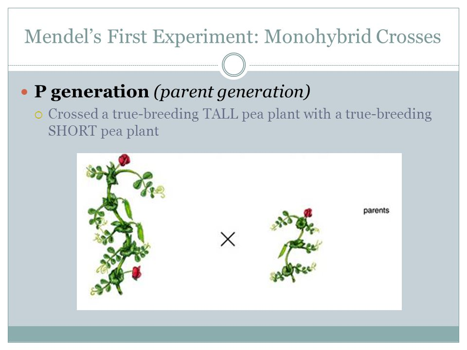 Mendel's First Experiment: Monohybrid Crosses P generation (parent generation)  Crossed a true-breeding TALL pea plant with a true-breeding SHORT pea
