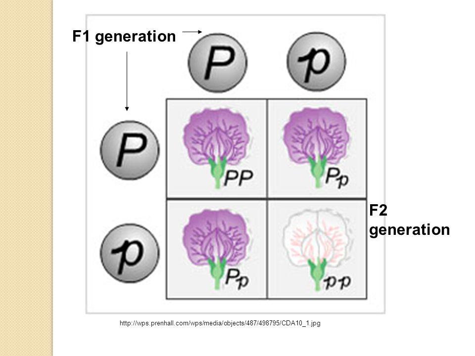 F1 generation F2 generation http://wps.prenhall.com/wps/media/objects/487/498795/CDA10_1.jpg
