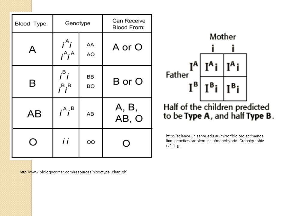 http://www.biologycorner.com/resources/bloodtype_chart.gif http://science.uniserve.edu.au/mirror/biolproject/mende lian_genetics/problem_sets/monohybr
