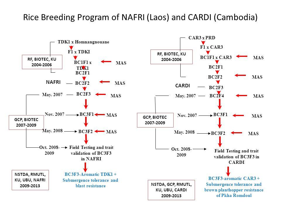 Rice Breeding Program of NAFRI (Laos) and CARDI (Cambodia) TDK1 x Homnangnouane F1 x TDKI BC1F1 x TDK1 BC2F1 BC2F2 MAS BC2F3 RF, BIOTEC, KU 2004-2006 NAFRI GCP, BIOTEC 2007-2009 MAS BC3F1 BC3F2 Field Testing and trait validation of BC3F3 in NAFRI MAS Nov.
