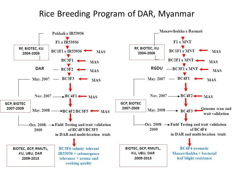 Rice Breeding Program of DAR, Myanmar