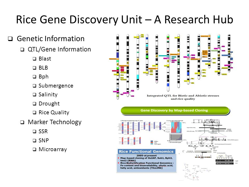 Rice Gene Discovery Unit – A Research Hub  Genetic Information  QTL/Gene Information  Blast  BLB  Bph  Submergence  Salinity  Drought  Rice Q