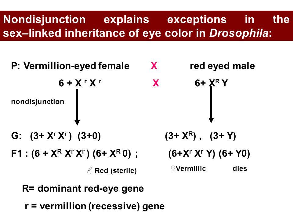 P: Vermillion-eyed female X red eyed male 6 + X r X r X 6+ X R Y G: (3+ X r X r ) (3+0) (3+ X R ), (3+ Y) F1 : (6 + X R X r X r ) (6+ X R 0) ; (6+X r