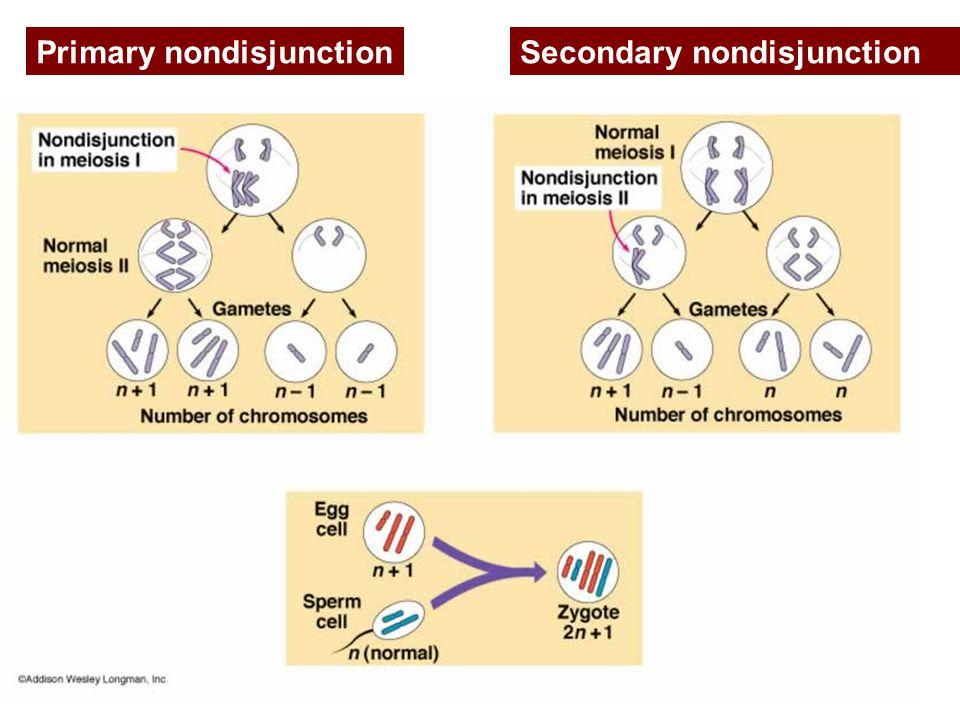 Primary nondisjunctionSecondary nondisjunction
