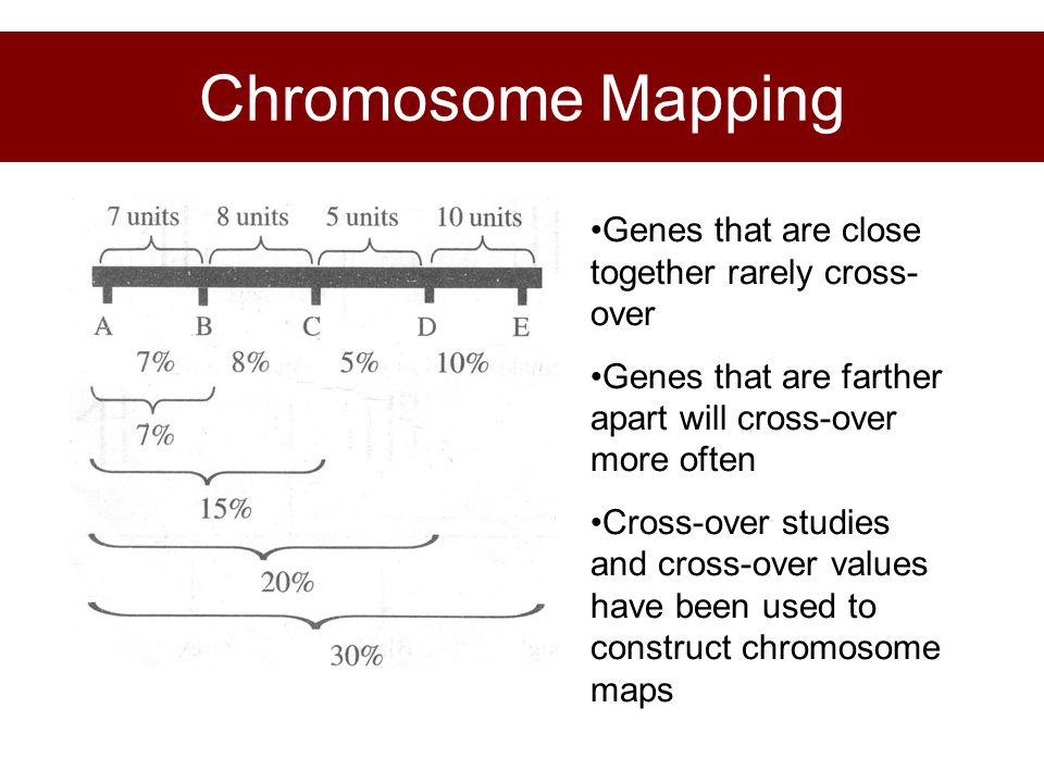 Chromosome Mapping Genes that are close together rarely cross- over Genes that are farther apart will cross-over more often Cross-over studies and cro