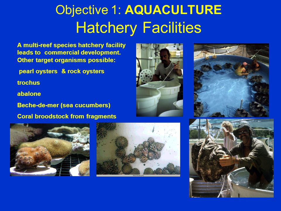 Objective 1: AQUACULTURE Hatchery Facilities A multi-reef species hatchery facility leads to commercial development.