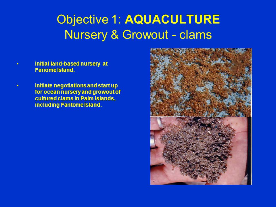 Objective 1: AQUACULTURE Nursery & Growout - clams Initial land-based nursery at Fanome Island.