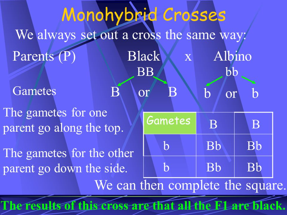 Monohybrid Crosses We always set out a cross the same way: Parents (P)BlackxAlbino BBbb Gametes B or B b or b Gametes The gametes for one parent go along the top.