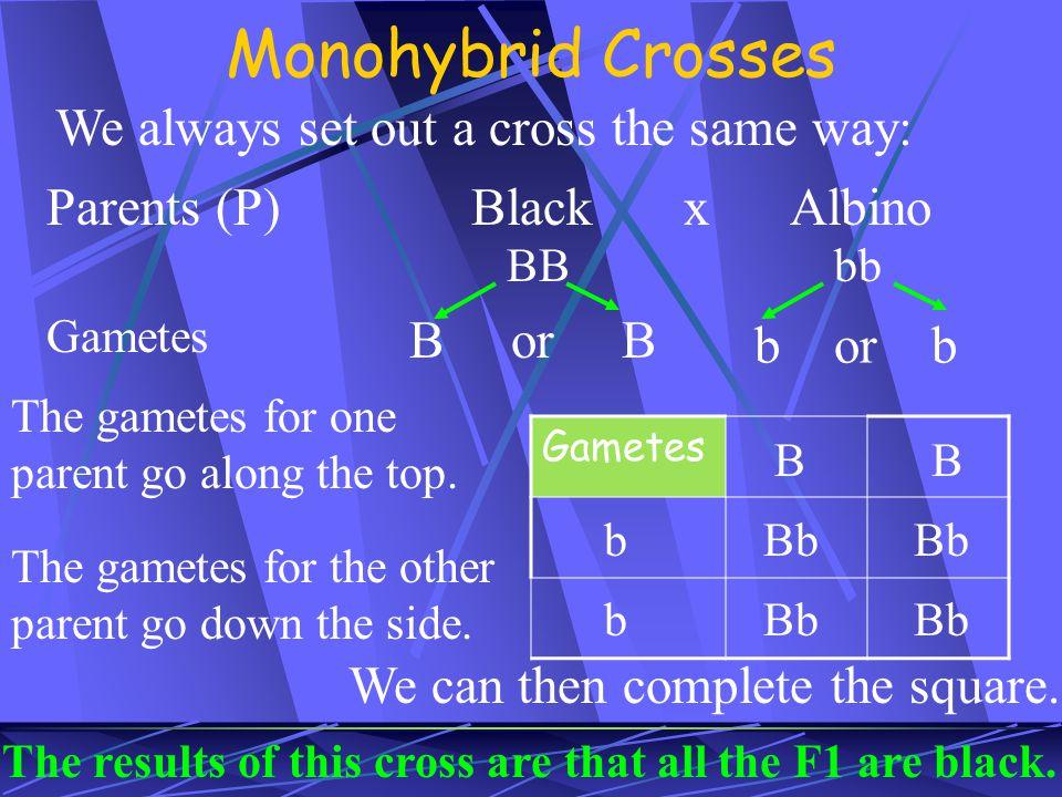 Monohybrid Crosses We always set out a cross the same way: Parents (P)BlackxAlbino BBbb Gametes B or B b or b Gametes The gametes for one parent go al