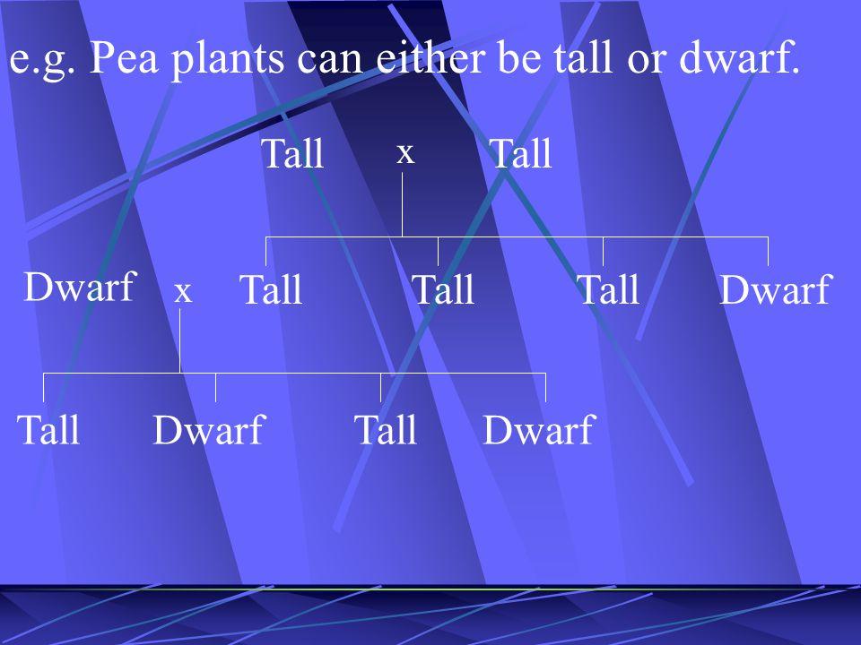 e.g. Pea plants can either be tall or dwarf. Tall x Dwarf x Tall Dwarf