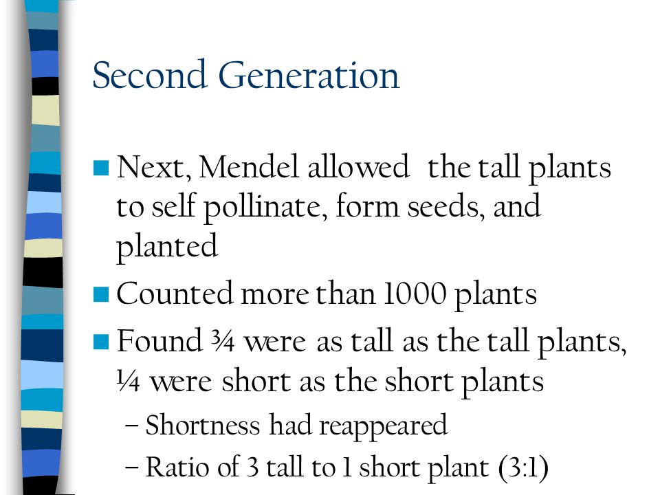 First Generation Mendel selected a tall plant and cross pollinated with a short pea plant Planted seeds All resulting offspring were tall As if short
