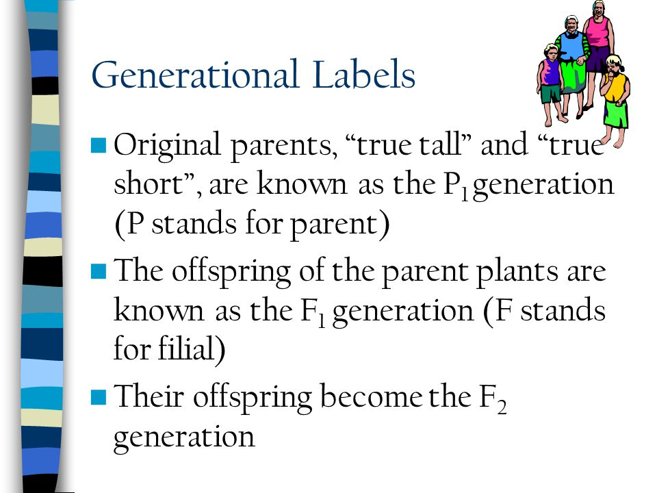 Second Generation Next, Mendel allowed the tall plants to self pollinate, form seeds, and planted Counted more than 1000 plants Found ¾ were as tall a