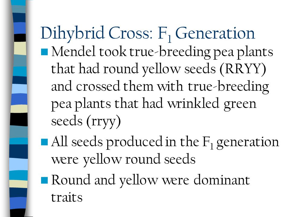 Mendel's Dihybrid Crosses Mendel performed another set of crosses in which he used peas that differed from each other in two traits rather than only o
