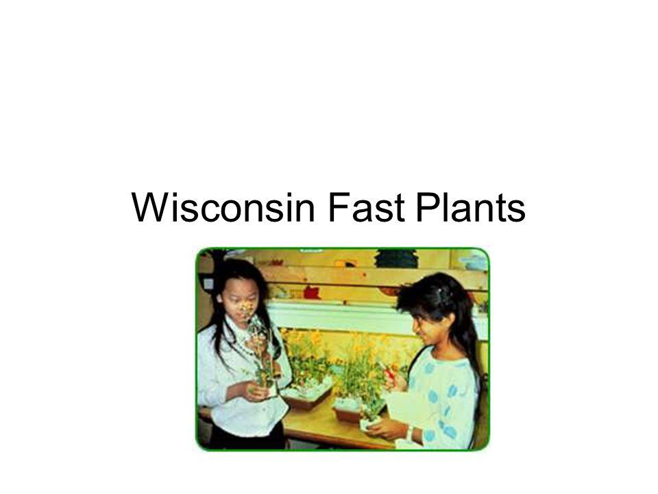Wisconsin Fast Plants