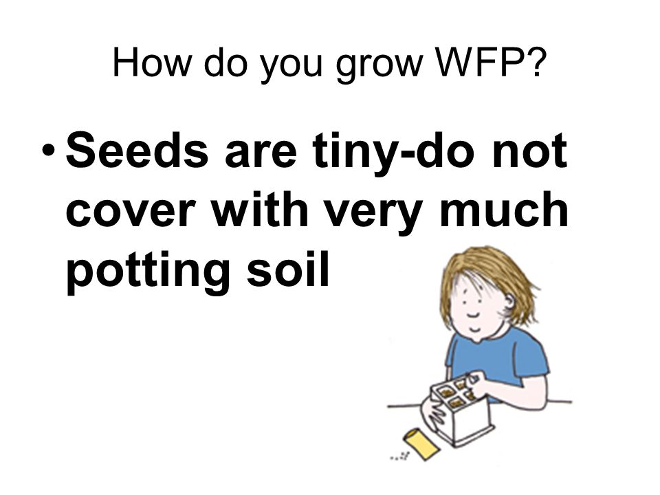 How do you grow WFP Seeds are tiny-do not cover with very much potting soil