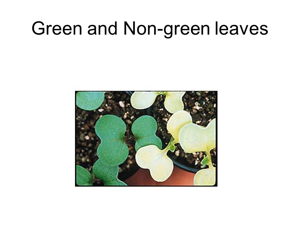 Green and Non-green leaves