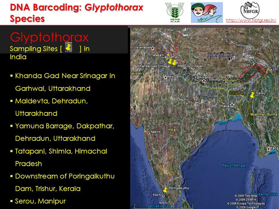 T AXONOMY I N A CTION — the leader in establishing and operating partnerships for taxonomy in developing countries | www.bionet-intl.org | bionet@bionet-intl.orgwww.bionet-intl.orgbionet@bionet-intl.org Glyptothorax Sampling Sites [ ] in India  Khanda Gad Near Srinagar in Garhwal, Uttarakhand  Maldevta, Dehradun, Uttarakhand  Yamuna Barrage, Dakpathar, Dehradun, Uttarakhand  Tatapani, Shimla, Himachal Pradesh  Downstream of Poringalkuthu Dam, Trishur, Kerala  Serou, Manipur http://www.nbfgr.res.in/ DNA Barcoding: Glyptothorax Species
