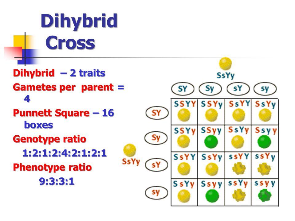 Dihybrid Cross Dihybrid – 2 traits Gametes per parent = 4 Punnett Square – 16 boxes Genotype ratio 1:2:1:2:4:2:1:2:1 1:2:1:2:4:2:1:2:1 Phenotype ratio 9:3:3:1 9:3:3:1