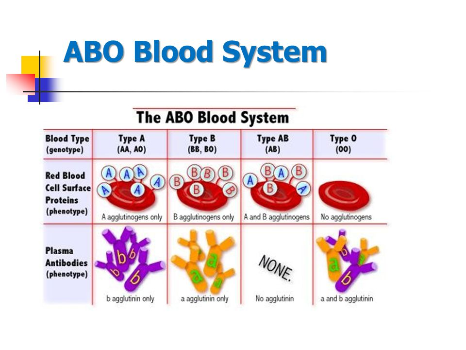 ABO Blood System